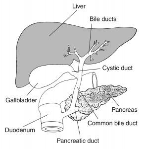 gall-bladder-symtoms