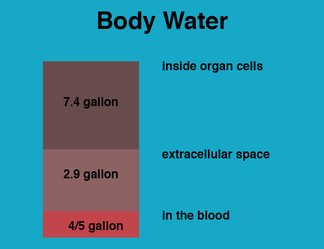 Water intoxication body water