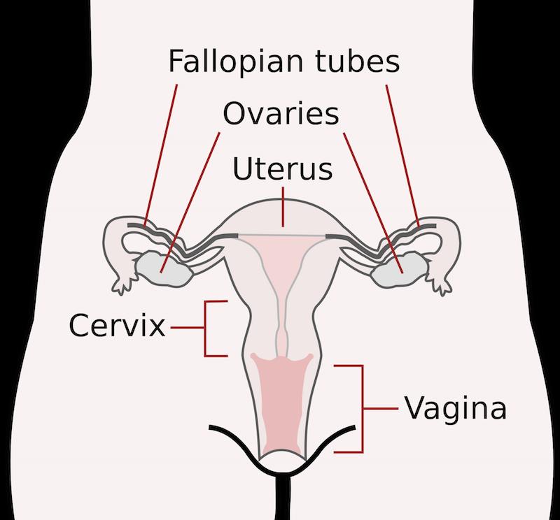 left lower abdominal pain in women