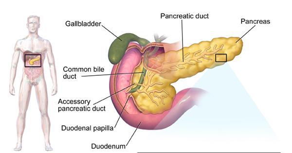 location of pancreas pain